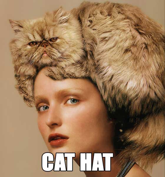 cat in hat hat. cat in hat hat. cat in hat